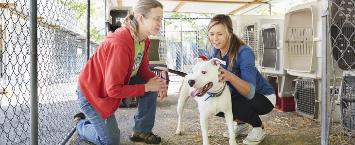 When considering how to budget for a dog, look at animal shelters where adoption fees are more affordable.